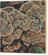 Wild Thing Wood Print