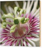 Wild Tropical Flower Wood Print