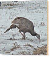 Wild Turkey - Meleagris Gallopavo Wood Print