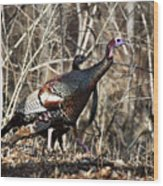 wild Turkey 2 Wood Print