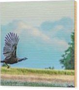 Wild Turkey Flight Wood Print