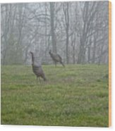 Wild Turkey Grazing At Dawn Wood Print