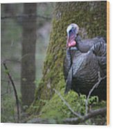 Wild Turkey Great Smoky Mountains National Park Wood Print