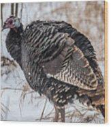Wild Turkey Not The Whiskey Wood Print
