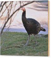 Wild Turkey. Wood Print