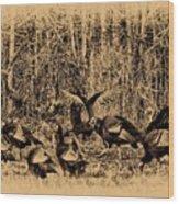 Wild Turkeys Wood Print by Bill Cannon