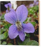 Wild Violet 1 Wood Print