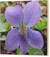 Wild Violet 2 Wood Print