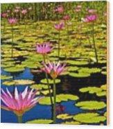 Wild Water Lilies 3 Wood Print