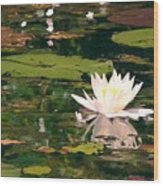 Wild Water Lilly Wood Print