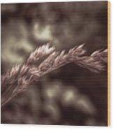 Wild Wheat Wood Print