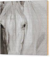 Wild White Horse Wood Print