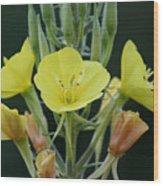 Wild Yellow Wood Print