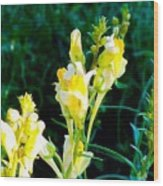 Wild Yellow Flowers Wood Print