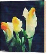 Wild Yellow Flowers On Dark Background Wood Print