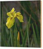 Wild Yellow Iris Wood Print