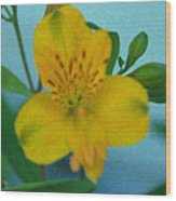 Wild Yellow Lilly Wood Print