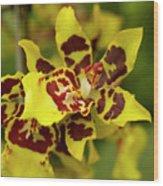 Wildcat Doris Orchid Wood Print