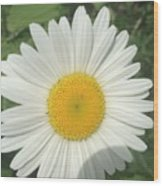 Wilddaisy Wood Print