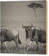 Wildebeest 8947b Wood Print
