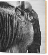 Wildebeest Wood Print