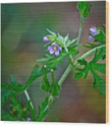 Wildflower 1 Wood Print