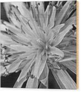Wildflower 5 Black N White Wood Print