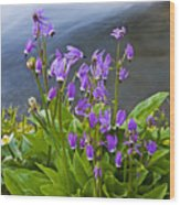 Wildflower Cascade Wood Print by Mike  Dawson
