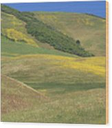 Wildflower Display - Salisbury Potrero Wood Print