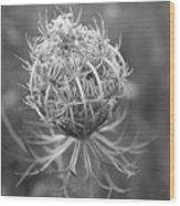 Wildflower I Wood Print