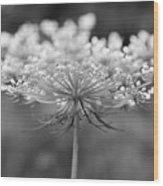 Wildflower II Wood Print