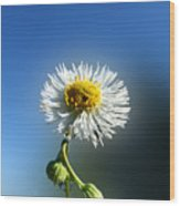 Wildflower In The Wind 209 Wood Print