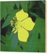 Small Sundrops Flower Wood Print