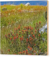 Wildflower Meadow With Indian Paintbrush Wood Print