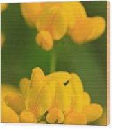 Wildflower Named Birdsfoot Trefoil Wood Print