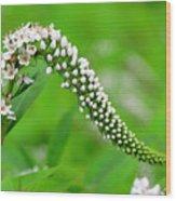 Wildflower Slide Wood Print