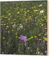 Wildflower Surprise Wood Print