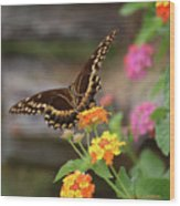 Wildflower Swallowtail Wood Print