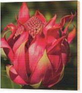 Wildflower Waratah Wood Print