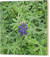 Wildflowers - All Alone And Blue Wood Print