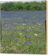 Wildflowers - Blue Horizon Too Wood Print