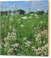 Wildflowers Along Country Road In Mchenry County Wood Print