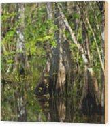 Wildflowers And Cypress Trunks In Florida Swamp Wood Print