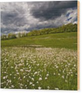 Wildflowers And Storm Clouds Wood Print