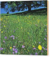 Wildflowers And The Oak Wood Print