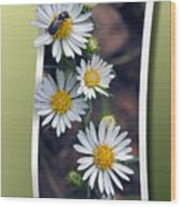 Wildflowers And Visitor Wood Print