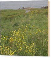 Wildflowers At Cape Spear Wood Print