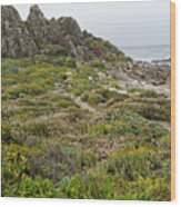 Wildflowers At China Rock - Pebble Beach - California Wood Print