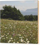 Wildflowers At Lobster Cove Wood Print