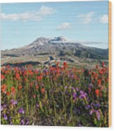 Wildflowers At Mount St Helens Wood Print